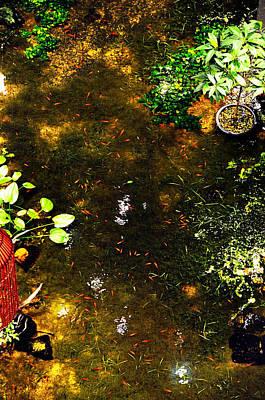 Photograph - Pool Fish by Money Sharma