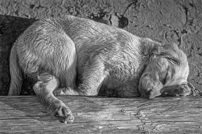 Retriever Digital Art - Pooped Puppy - Paint Bw by Steve Harrington