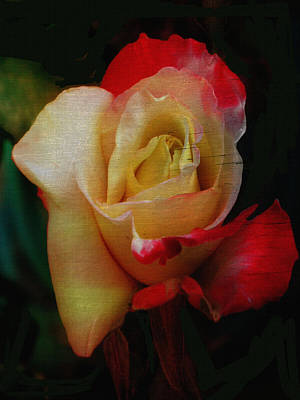 Digital Art - Poor Film Quality Rose by Dennis Buckman