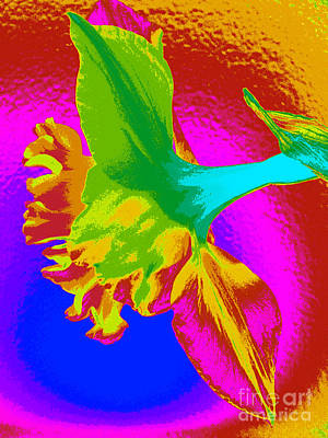 Photograph - Pop Art Daffodil by Amber Nissen