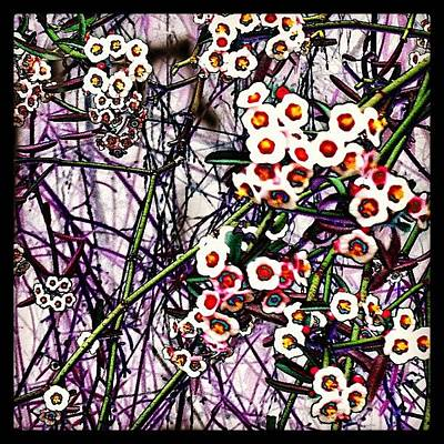 Pop Art Photograph - Pop Art Posies by Michele Beere