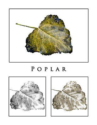 Photograph - Poplar Leaf 3x White by Greg Jackson