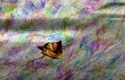 Digital Art - Poplar Leaf Rainbow by Aliceann Carlton