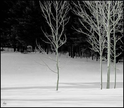 Photograph - Poplar Shadows by Wayne King
