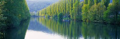 Poplar Trees On River Aare, Near Canton Art Print
