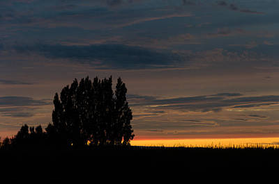 Poplars Flanders Sunset Art Print
