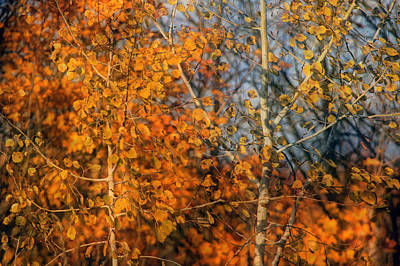 Photograph - Poplars In Autumn by Jim Vance