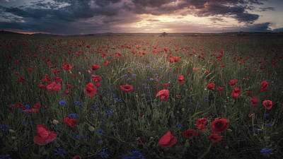 Floral Landscape Photograph - Poppies by Alvaro S?nchez