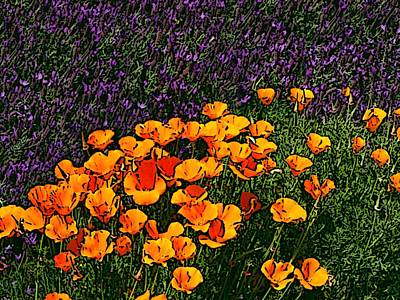 Digital Art - Poppies And French Lavender by Ben Freeman