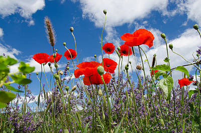 Photograph - Poppies And Lavender by Dany Lison