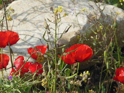 Photograph - Poppies And Stone by Esther Newman-Cohen