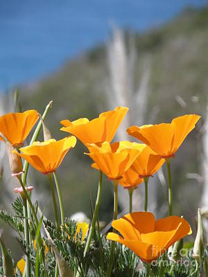 Poppies Art Print by Bev Conover