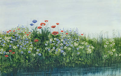 Wild Flowers Drawing - Poppies By A Stream by Andrew Nicholl