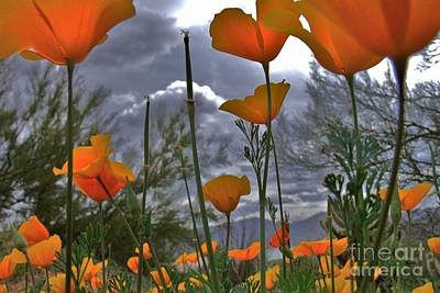 Photograph - Poppies by Mistys DesertSerenity