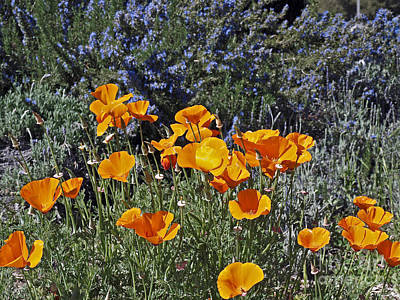 Bath Time Rights Managed Images - Poppies Royalty-Free Image by Howard Stapleton