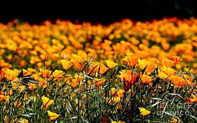 Photograph - Poppies Ignite by Patrick Witz