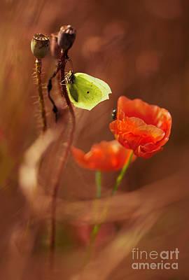 Poppies Impression Art Print by Jaroslaw Blaminsky