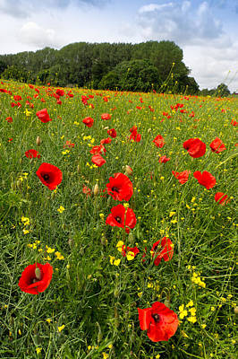 Photograph - Poppies In A Field by Gary Eason