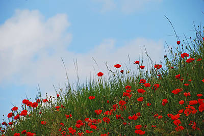 Photograph - Poppies In A French Landscape by Ankya Klay
