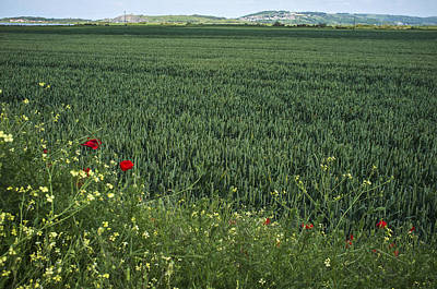 Photograph - Poppies On The Edge by Christopher Rees