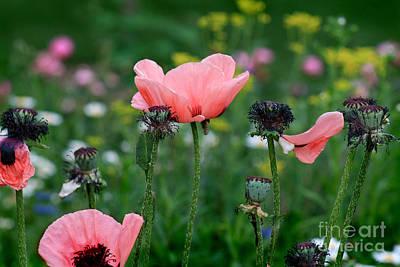 Photograph - Poppies In Garden by Karen Adams