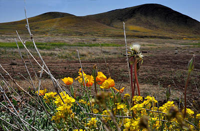 Art Print featuring the photograph Poppies In The Field Chiracahua Mountains by Diane Lent