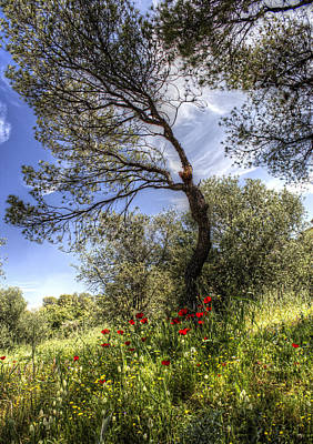 Photograph - Poppies In The Field by Radoslav Nedelchev