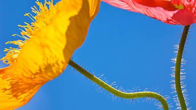 Poppies In The Sky Art Print by Joan Herwig