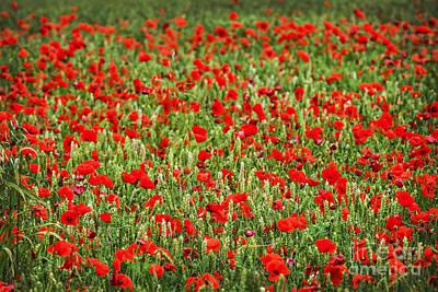 Poppies In Wheat Print by Elena Elisseeva