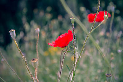 Provence Photograph - Poppies by Jane M