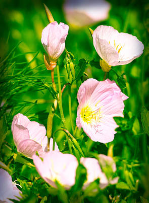 Photograph - Poppies by Melinda Fawver