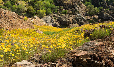 Poppies On The Stanislaus River Art Print