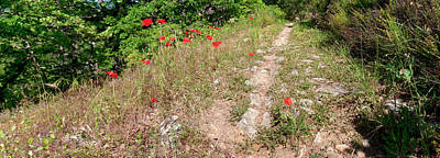 Saint-martin Photograph - Poppies On The Way To Caseneuve by Panoramic Images