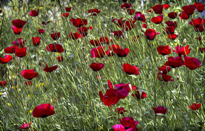 Photograph - Poppies by Radoslav Nedelchev
