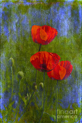 Poppies Print by Veikko Suikkanen