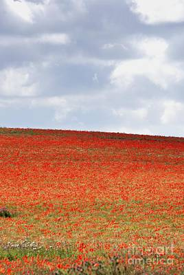 Photograph - Poppies 1 - A Field Of Red by Wendy Wilton