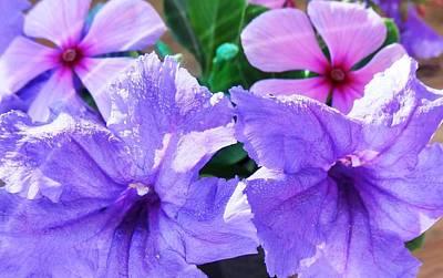Popping Purple Petals Beauty Art Print by Belinda Lee