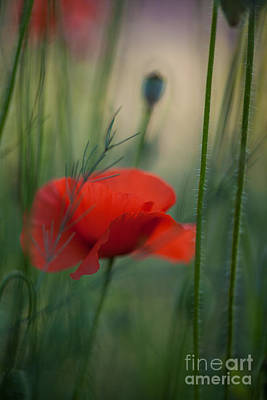 Impressionist Photograph - Poppy Abstract by Mike Reid