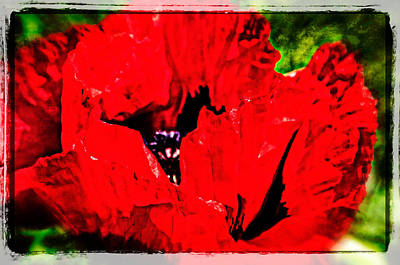 Photograph - Giant Poppy Art  by Roxy Hurtubise