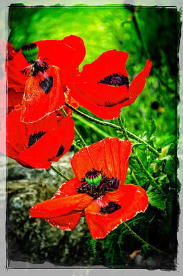 Photograph - Poppy Art 8 by Roxy Hurtubise