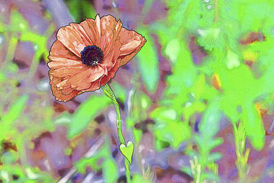 Photograph - Poppy Art by Jack R Perry