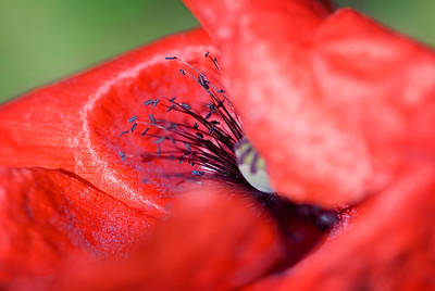 Photograph - Abstract Flowers Art - Blink Of A Poppy by Modern Art Prints