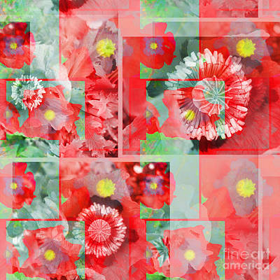 Photograph - Poppy Collage by Barbara Moignard