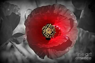 Wild Flowers Photograph - Poppy Color Splash by Clare Bevan