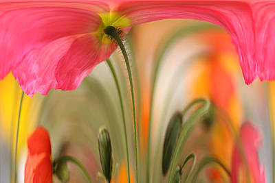 Wall Art - Photograph - Poppy by Debbie Hartley