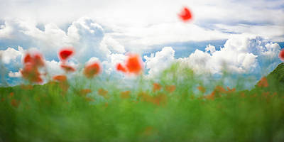 Photograph - Poppy Fantasy by Sarah-fiona  Helme