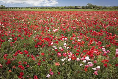 Photograph - Poppy Field by David and Carol Kelly