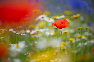 Photograph - Poppy Field Fantasy by Sarah-fiona  Helme