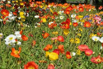 Photograph - Poppy Field by Jocelyn Friis