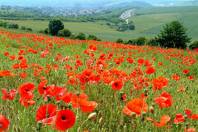 Poppy Field Art Print by John Topman